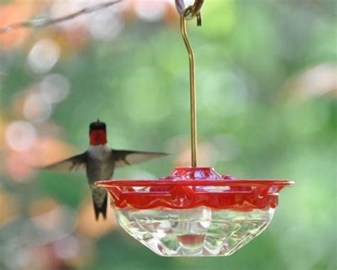 simple syrup ratio for hummingbirds