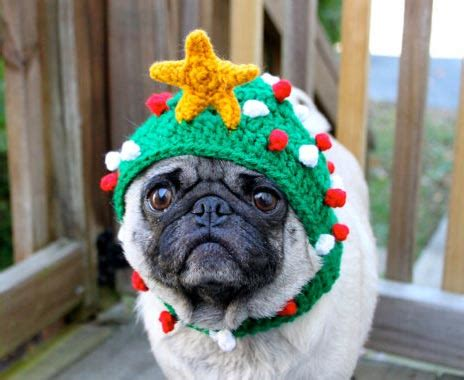 puppies with hats dogs with hats sweet