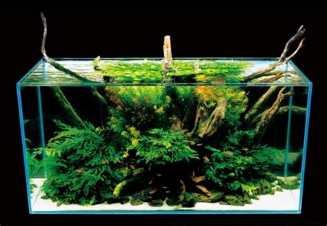 Takashi Amano Aquascaping by Pin By Vicki Tunkel On Aquascapes