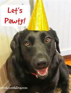 talking dogs at for love of a dog happy birthday to me