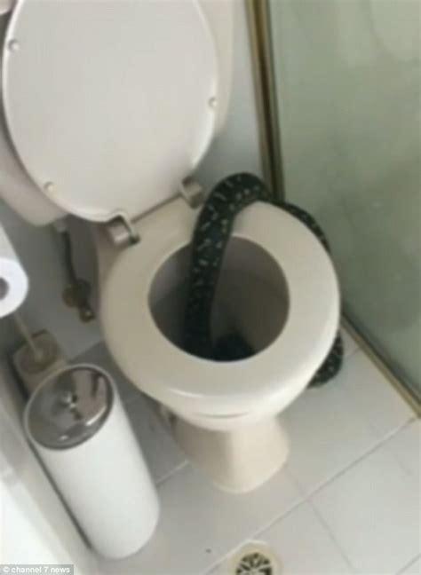 python in bathroom sydney woman alison mason found a large diamond python in
