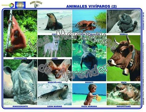 Imagenes De Animales Viviparos | imagenes de animales oviparos y viviparos las tareas del