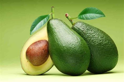 avocado safe for dogs can dogs eat avocado or are avocados bad for dogs ultimate home