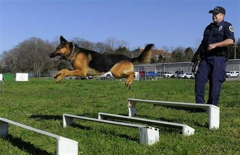 dogs robbing bank tennessee k 9 killed by bank robber inspires new