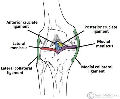 diagram of ligaments in the knee the knee joint articulations movements injuries