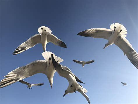gravy boat metaphor seagull snowglobe gravy year