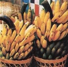Bibit Pisang Ambon Dengan Rasa Yang Sangat Manis resep resep iyra jenis jenis pisang