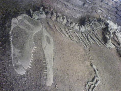imagenes de fosiles f 243 siles de los dinosaurios
