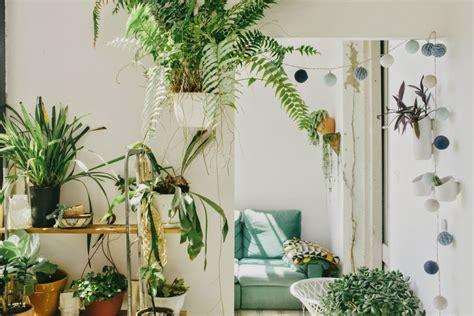 tanaman hias gantung cantik tukang taman surabaya