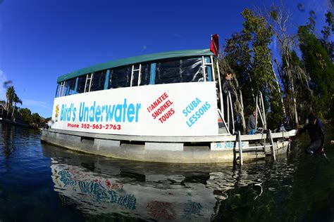 crystal river boat tours manatee tour boat swim with the manatees