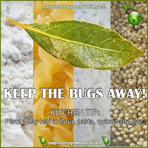 what keeps bed bugs away keeping bed bugs away a great tip to keep bugs away this