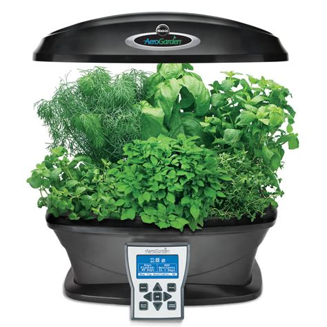 grow herbs in kitchen use an indoor garden system to grow herbs in the kitchen