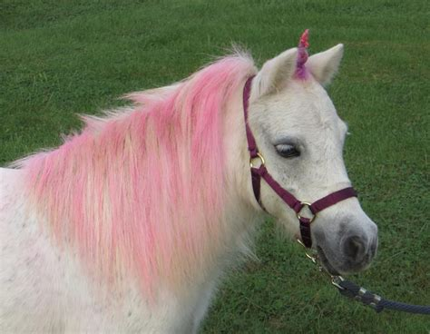 Search Real Real Unicorns Images Search