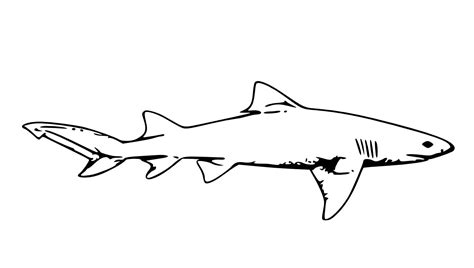 printable shark images tag shark coloring pages free kids coloring pages