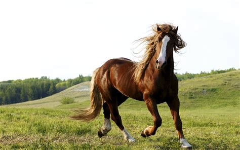wallpaper hd horse brown horses wallpapers hd brown horses backgrounds hd