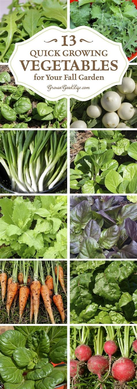 Winter Garden Vegetables Begs For Fdal Butterflies Fairies
