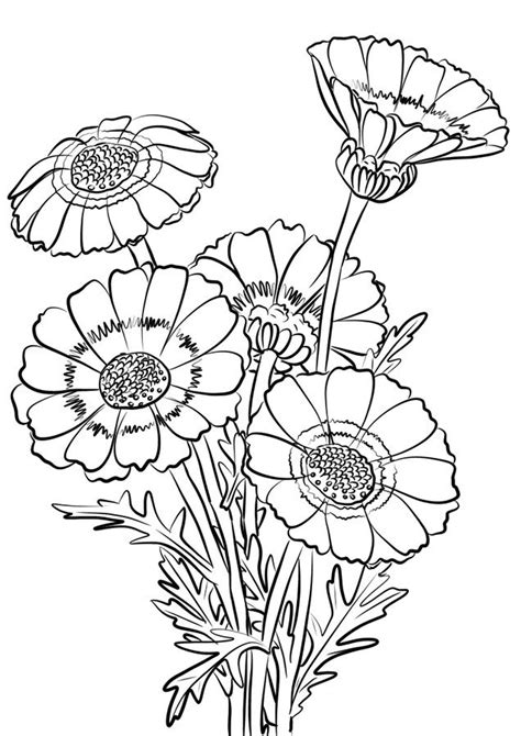 mums colouring book of chrysanthemum pages coloring pages