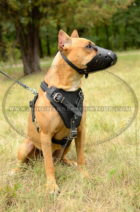 harnesses for large dogs release harness pitbull harness elsavadorla