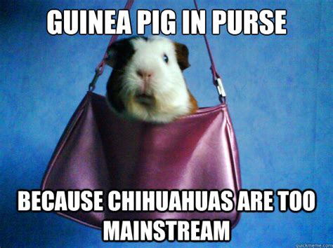 Pig Meme - guinea pig meme 28 images photos a meme that describes