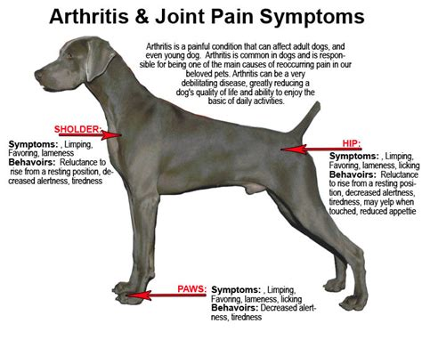 hip problems in dogs dogs with arthritis myideasbedroom