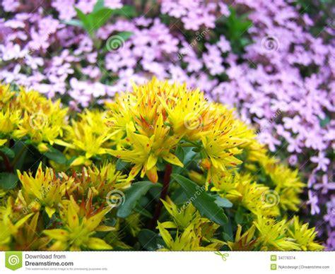 rock garden flowers smalltowndjs