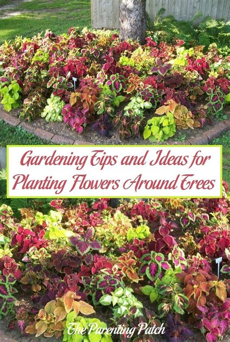 flower gardening tips gardening tips and ideas for planting flowers around trees