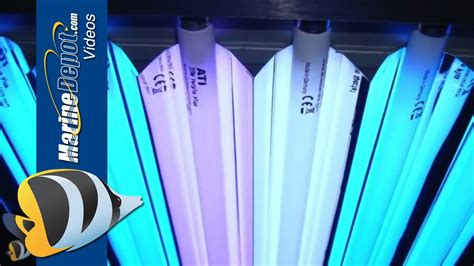 t5 reef lighting bulbs t5ho fluorescent proven lighting for your reef aquarium