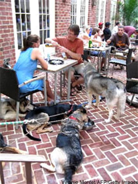 service dogs in restaurants dogs on restaurant patios any difference take a poll table hopping