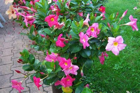 vendita fiori piante vendita fiorista vendita di piante e fiori on line