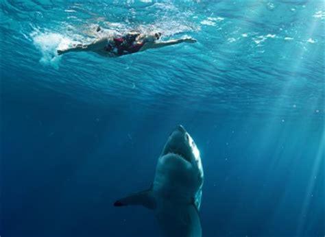 boat spray painting brisbane swimmer mauled in shark attack near brisbane australia