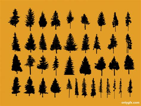 15 pine tree 40 achingly 40 pine tree vector svg onlygfx