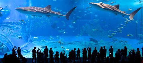 japanese aquarium japan okinawa aquarium