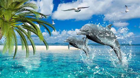dolphins summer sea gulls palm desktop wallpaper hd