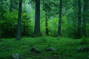 Download image temperate forest biome pc android iphone and ipad