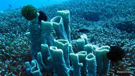 dive gili islands diving gili islands sunset reef with 7seas dive gili