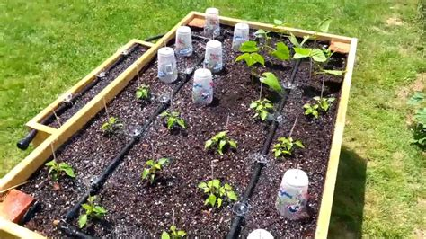 Homegrown Life How To Install Drip Irrigation Homesteading Vegetable Garden Watering Systems