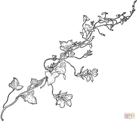 Coloring Page Of Grapes On A Vine | sweet pea vine coloring page free printable coloring pages