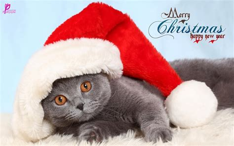 cute christmas animal  quotes gallery quotesgram