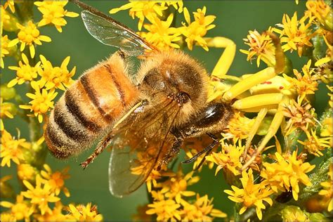 spider  bee flickr photo sharing