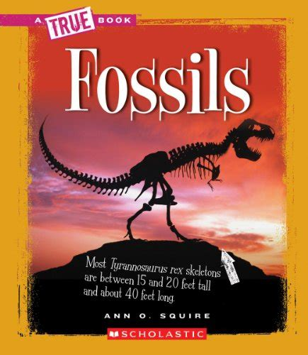 Curious About Fossils Buyer S Guide For 2019 Bgeds Reviews