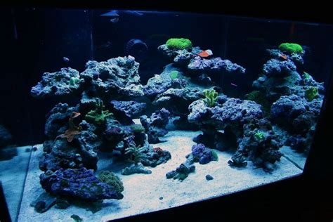 saltwater aquascape top reef tank aquascapes current tank info 30x30x18 quot 70