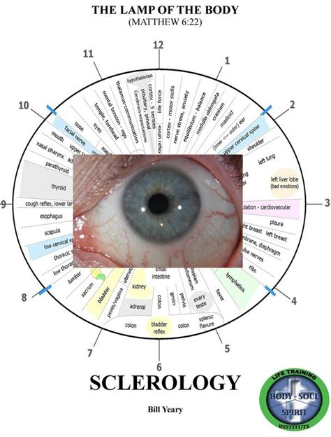 Iridology Detox by 76 Best Images About Iridology On Osaka