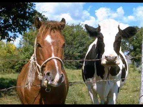Realtor by Horse And Cow Property Bradenton Florida Horse Farm