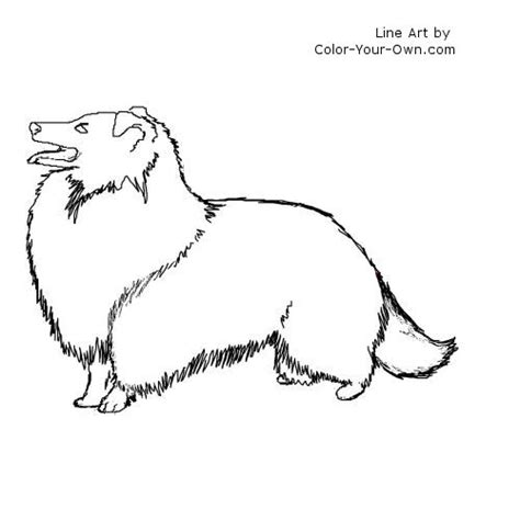 sheep dog coloring page shetland sheep dog colouring pages