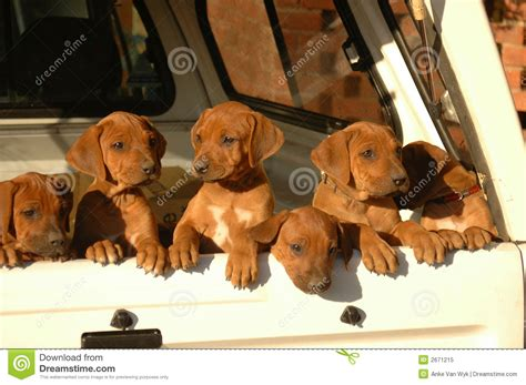free puppies in my area free puppies in my area breeds picture