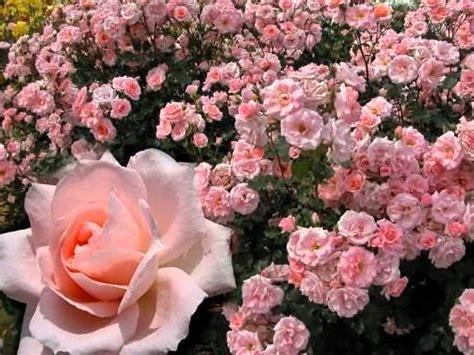 imagenes de jardines lindos 161 jardines yetzine59 wmv youtube