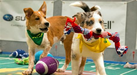 puppy bowl puppies 2017 puppy bowl 2017 meet the dogs the more 2017 bowl just jared