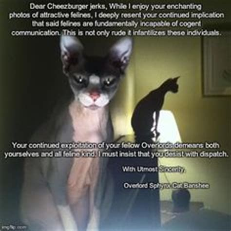 Hairless Cat Meme - sphynx cat memes on pinterest sphynx cat