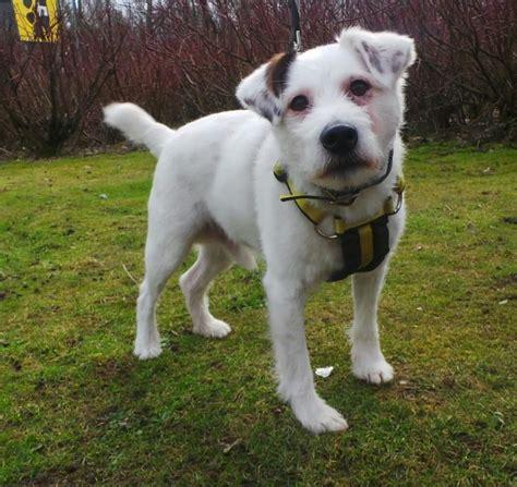 pug rescue scotland greyhound rescue