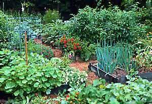 Kids Web India kitchen garden,French bean,Cluster bean